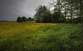 grass field background. Nature Grass Flowers Trees Field Clouds Landscape Wallpapers Background