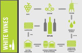 Gastronomy 101 White Wine Rose Wine Process