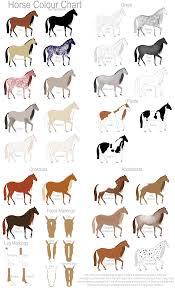 Miniature Show Horse Horse Colour Chart By Gaurdianax