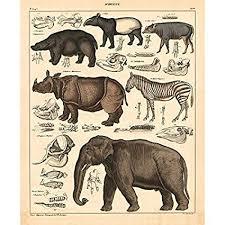 Amazon Com Vintage Poster Print Art Animals Identification