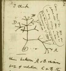 charles darwin and alfred russel wallace their theory of  charles darwin tree of life sketch 1837