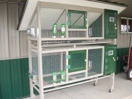images about Quail Pen on Pinterest   Quails  Pens and       images about Quail Pen on Pinterest   Quails  Pens and Chicken coops