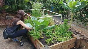 where to plant your home garden