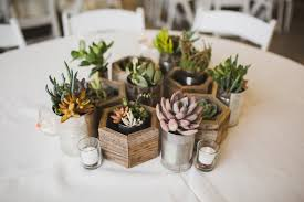 2 succulents in recycled planters