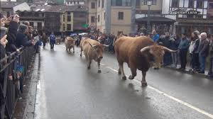Image result for potes cows