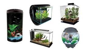 Decorative Betta Fish Bowls Top 60 Cool Betta Fish Tanks 60 Heavy 21