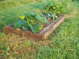 curtis and kaye absher raised bed gardening