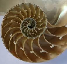 Simetría! en la Naturaleza : Blog de Emilio Silvera V.