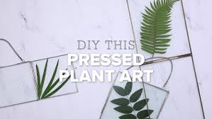 diy pressed plants in floating frames room makeovers to suit your life