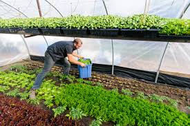 in his book urban farmer curtis stone writes about how to build a successful farm on a quarter acre of land