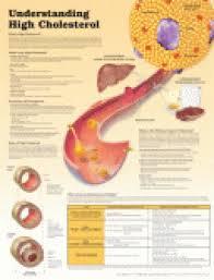 Laminated Medical Charts / Posters
