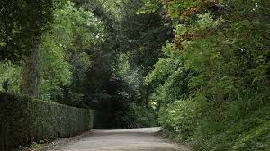 background images nature dark. Beautiful Images Dark Forest Or Park Walkway Scary Natural Background 4K 2160p 30fps UHD  Footage  Natural Path Through The Vegetation Stock Video Footage  Throughout Background Images Nature E