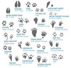 Animal Tracks Guide Infographic Animal Tracks Hunting Tips