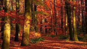 4K Ultra HD Autumn Wallpapers HD ...