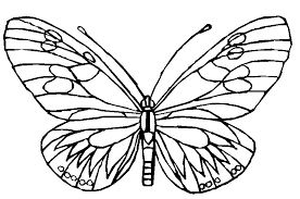 Small Picture Butterfly Pages to Color Coloring Pages
