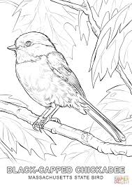 Massachusetts State Bird Coloring Page Jpg