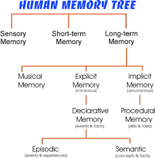 how do family trees work memory s family tree memorise