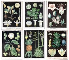 if you want an easy and inexpensive diy route you can find a pretty good selection of black botanicals at vintage printable these are pictures from their