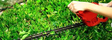 trugreen lawn care lorton va rugs decorating ideas
