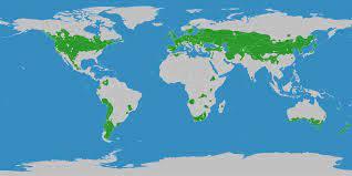 Kühlgemäßigtes Klima – Wikipedia