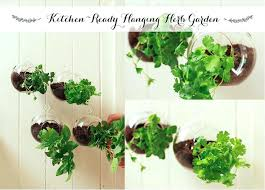kitchen ready hanging herb garden cozy yard window