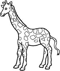 Giraffe Preschool Coloring Pages Zoo Animals Embroidery Designs