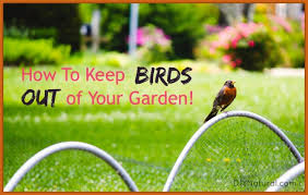 how to keep birds away from garden. How To Keep Birds Out Of Garden Away From O