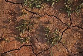 world losing farm soil daily to salt induced degradation unu inweh blog post