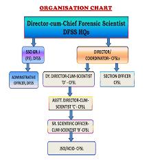 Mha Organisation Chart Organizational Structure
