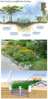 Small Picture 6 Steps to Make a Rain Garden Rain Wildlife and Landscaping