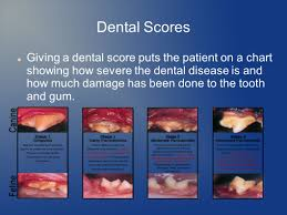 Hills Canine Dental Chart Dental Prophylaxis In Dogs And Cats Ppt Video Online Download
