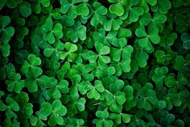 Green Wallpapers Green Leaf Clover Wall Hd Nature Wallpaper