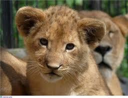 Реферат на тему тварини минулого ищем образец Детские стихи про животных реферат на тему тварини минулого