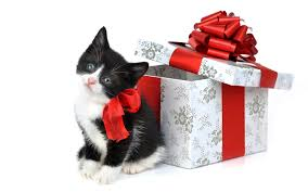 Cat Christmas Gift Ideas  Christmas Gift IdeasChristmas Gifts Cats