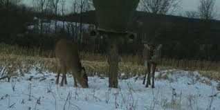 A Guide To Feeding Deer Throughout The Year