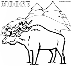 Small Picture Moose coloring pages Coloring pages to download and print