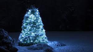 Outdoor Christmas Tree HD Wallpaper ...