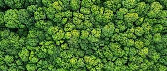 Random Forests And What They Mean For You Explained