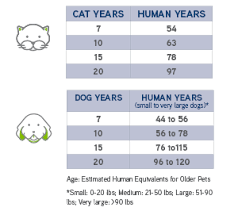 Puppy Age Chart Senior Pet Care Faq American Veterinary Medical Association