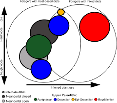 Neolithic And Paleolithic Venn Diagram Evidence Of Increasing Intensity Of Food Processing During