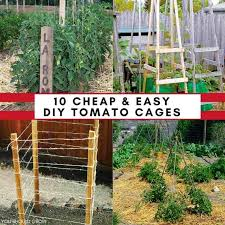 Diy tomato cage Nepinetwork 10 Ideas For Homemade Tomato Cages cheap Easy You Should Grow 10 Ideas For Homemade Tomato Cages cheap Easy You Should Grow