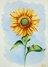 sunflower watercolor jessica siemens 2016small