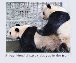 Funny Friendship Quotes Extraordinary Funny Friends Quotes