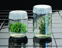 5 vessels and containers for plant tissue culture