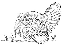 Small Picture Turkey Hunting Coloring Pages Head Red white and blue