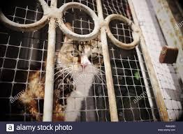 Warschau Polen Ein Tabby Katze Schaut Durch Ein Gitter Auf Einer