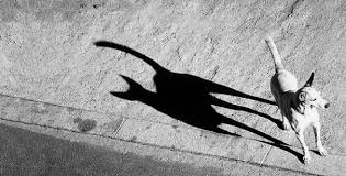 Image result for funny shadow