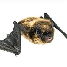 freehold pest control. Simple Control Cavanaugh Pest Control Freehold Bat  Reviews  To Freehold Pest Control