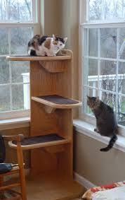 Corner Cat Shelves Pin By Allure Pet On Alexa Cat Tower Pinterest 99