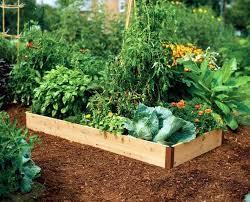 best soil for vegetable garden. dirt for garden bed starting a raised vegetable with tomato best soil . 7